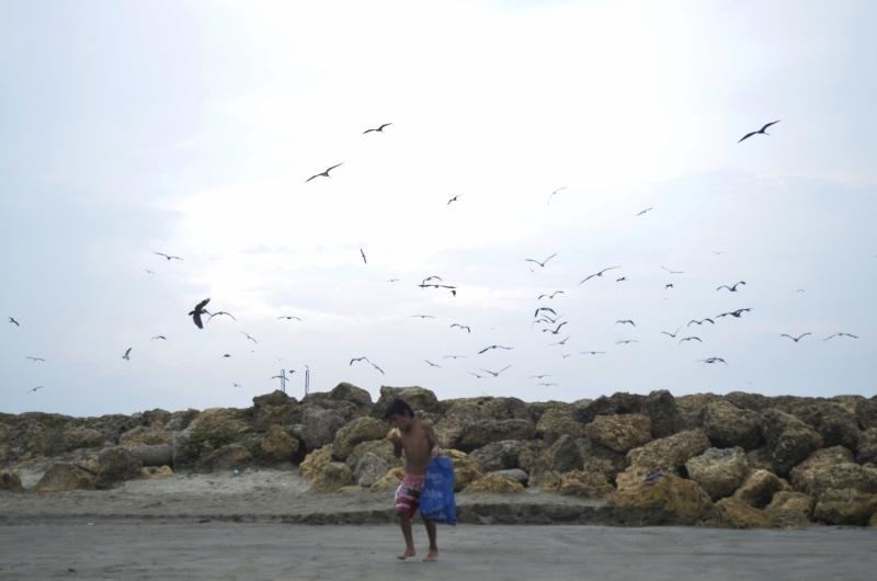 Cartagène Les oiseaux